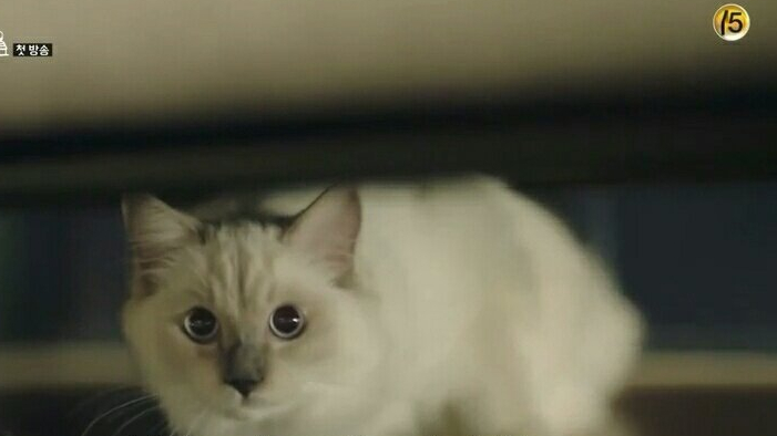Cute cat photo